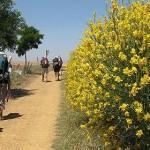 La Asociación Jacobea de Málaga da a conocer sus rutas para todo el año